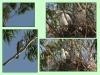 Example Photo